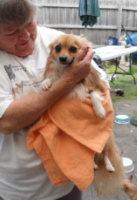 Hosay is about to have his first bath this week and we will see his glorious coat blossom! July 2012.