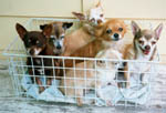 All the dogs in a basket!