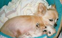 Picture of Peaches.