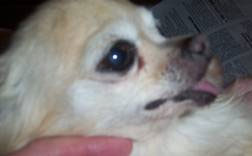 Picture of Peaches, who suffered from a disintegrated jaw.