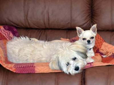 Zippy (right) and Kira (left) on the couch! July, 2013.