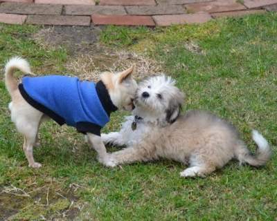 Zippy (left) and Kira (right) playing in the garden! July, 2013.
