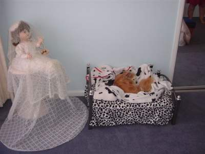 Goldie in her <b>own</b> bedroom!