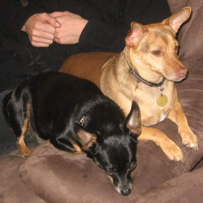 From C (May 2009): we now live with Starky on one and a half acres and Starky has had a brother for the last two years (that we saved from a person who was going to put him in the pound). The 2 dogs are best friends.