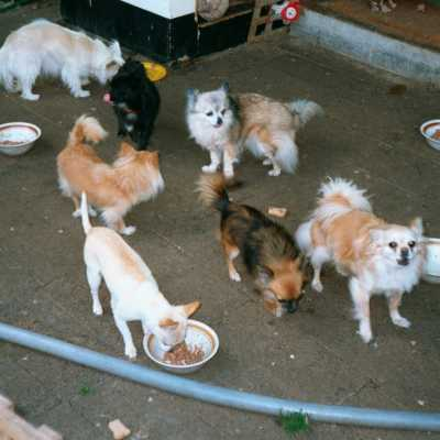 Front gallery picture of dogs at dinner time about 2002.