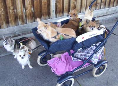 Front gallery picture of all the dogs patiently waiting for walkies!