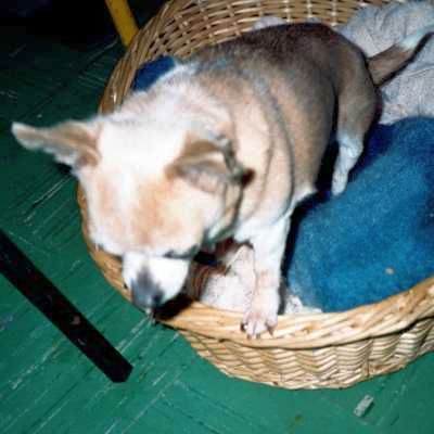 Front gallery picture of Lucky in 1995.
