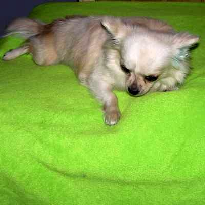 This is Mikky!